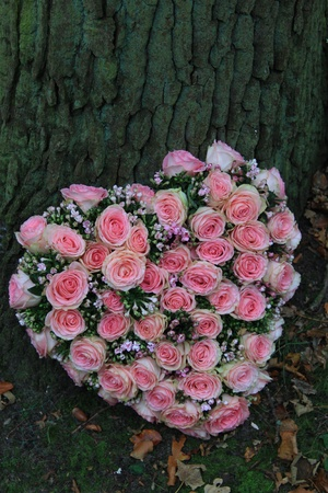Pink heartshaped sympathy flowers near a tree photo