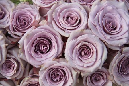 arreglo floral: Grupo de grandes rosas de color lila suave en la luz del sol, cerca