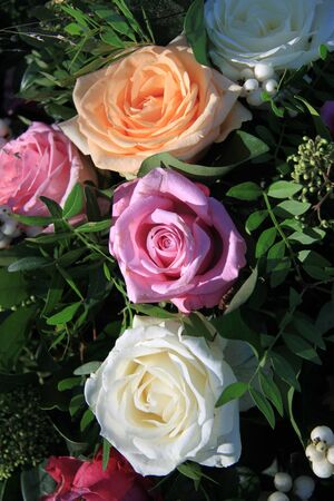 pastel shades: Different roses in pastel shades in the sunlight