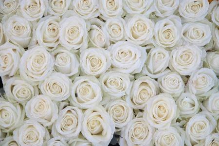 Große Gruppe von weißen Rosen mit Wassertropfen nach einem Regenschauer