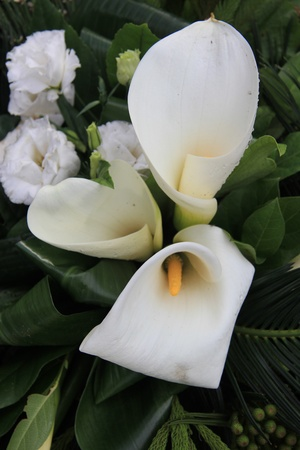 Sympathy bouquet with white arum lilies and carnations photo
