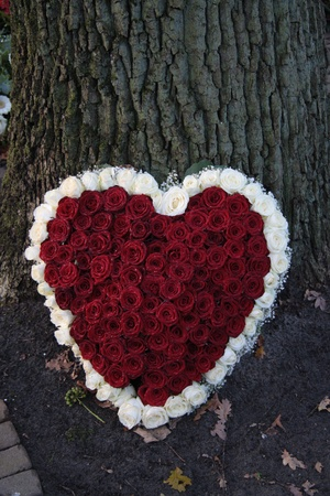 heart shaped: Heart shaped sympathy flower arrangement with red and white roses