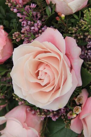 a big pale pink rose in close up photo