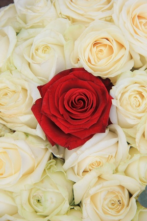 ivory: Red rose in a group of ivory white roses, part of bridal flower arrangement Stock Photo