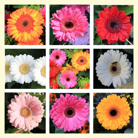 XL-collage made from 9 different gerbera photos