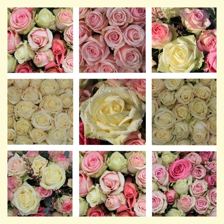 XL-collage made from 9 different white and pink roses images photo