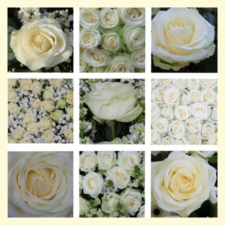 XL-collage made from 9 different high resolution white rose images Stock Photo - 13119009