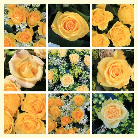 XL-collage made from 9 different high resolution yellow rose images photo