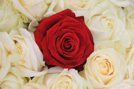 Red rose in a group of ivory white roses, part of bridal flower arrangement photo