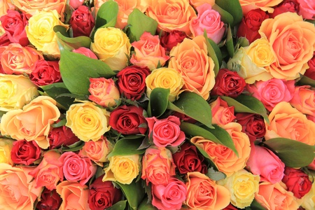 yellow, pink and red roses in a mixed rose bouquet Stock Photo