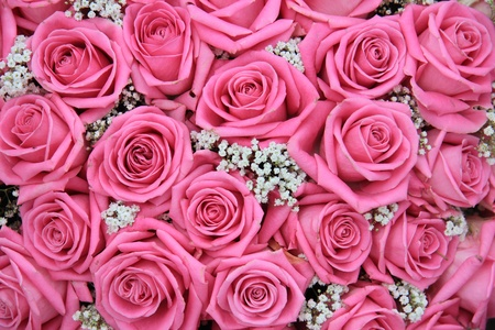 Group of pink roses and white gypsophila, detail of wedding flower arrangement, perfect as a background photo