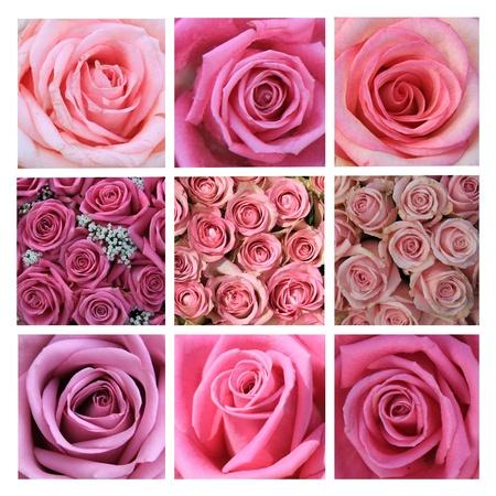 XL-kollázs készült 9 különböző nagyfelbontású rózsaszín rózsa képek Stock fotó