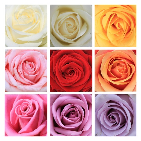 xL-collage made from 9 different high resolution rose images photo