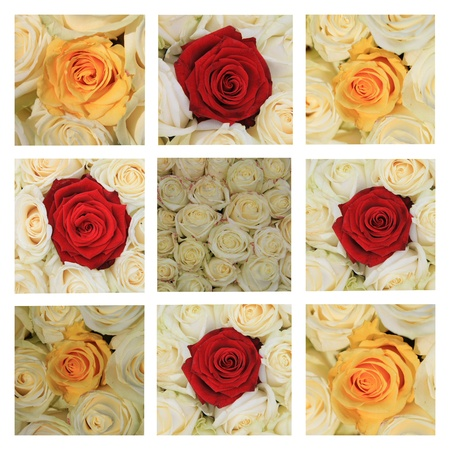 xL-collage made from 9 different high resolution rose images in white, yellow and red photo