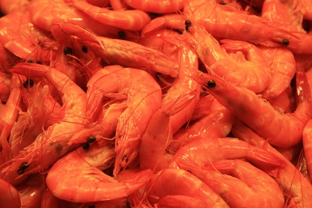 Fresh prawns of shrimps at the fish market in Barcelona photo
