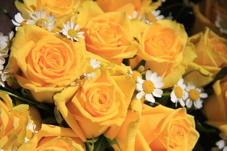 matricaria: Yellow rose and matricaria bouquet in full sunlight