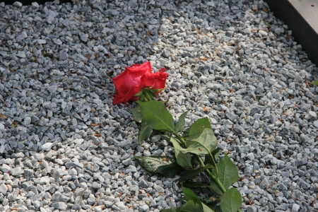 Single red rose on a covered grave, grey gravel photo