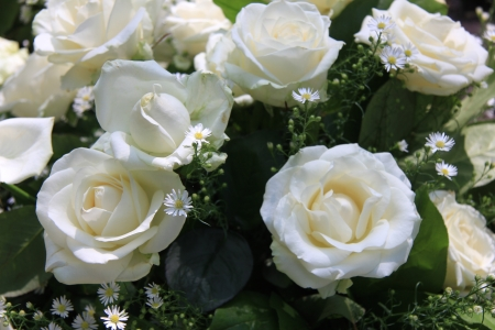 White roses and matricaria in a wedding centerpiece photo