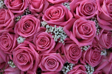 pink rose petals: Group of pink roses and white gypsophila, detail of wedding flower arrangement, perfect as a background