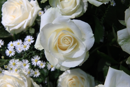 matricaria: White roses and matricaria in a wedding centerpiece