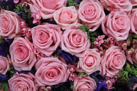 背景として完璧なピンクのバラの大きなグループ 写真素材