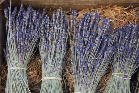 Small bouquets of lavender for sale in the Provence, France photo