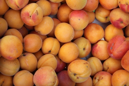 Big juicy apricots at a French market Stock Photo - 15269324