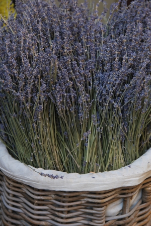 A wicker basket with a big bouquet of lavender photo