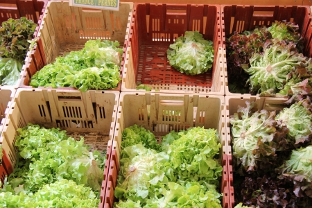 crudite: Various sorts of lettuce at a French market Stock Photo