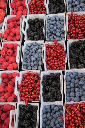 blueberries, rubus, red currant and raspberries, displayed in cardboard boxes