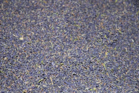 dry provisions: Close up of dried lavender flowers at a French market Stock Photo