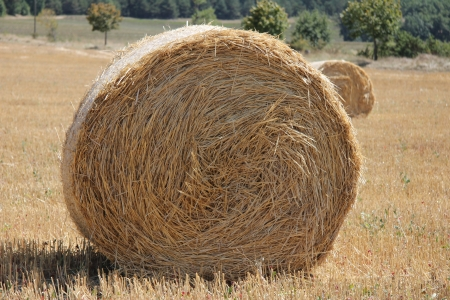Fresh bales of hay in a French farmland photo