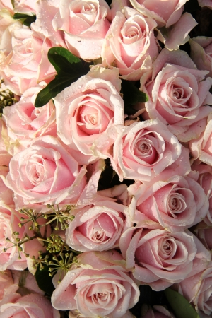 pale color: Pale pink roses with dew drops in a wedding centerpiece Stock Photo