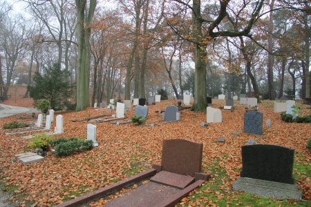 headstones: Cemetery in a fall forest, headstones covered with foliage