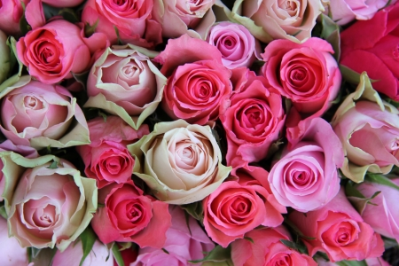 Group of roses in different shades of pink, part of floral wedding decorations Stock Photo - 17092243