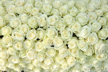 Big group of white roses, part of wedding decorations 版權商用圖片