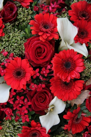 Red roses and gerberas combined with white arums in a flower arrangement photo