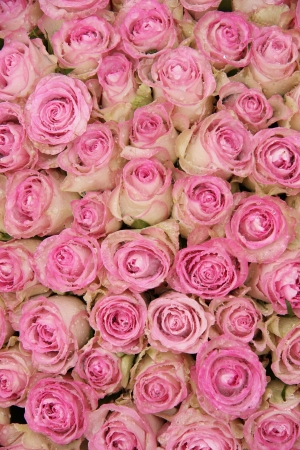 Group of pink roses and waterdrops, part of a floral wedding arrangement photo