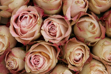 Group of pale pink roses with a touch of red, wedding decorations photo