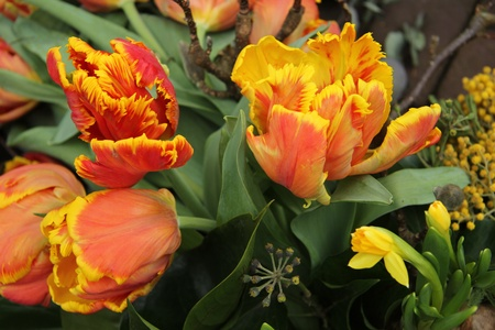Yellow orange parrot tulips in a floral arrangement photo