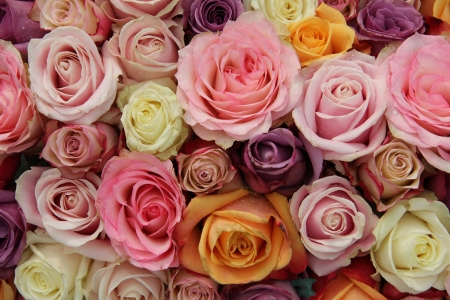 pastel shades: Rose arrangement for a wedding: different sized roses in various pastel shades Stock Photo