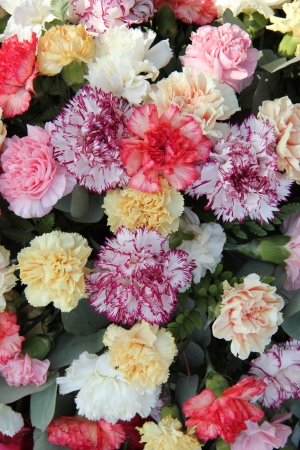 Carnations in various pastel colors for a wedding photo