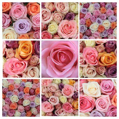 Pastel rose collage, 9 XL images photo
