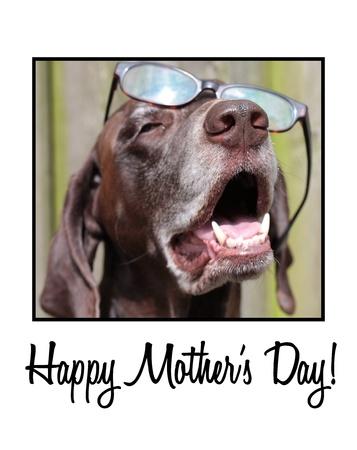 Pointer wearing glasses on mother s day card Reklamní fotografie