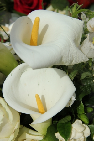 White calla lillies in a white flower arrangement, wedding decorations photo