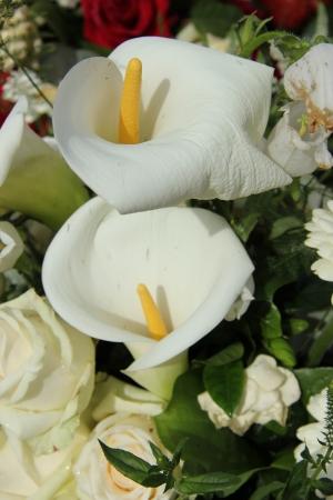 Weiße Calla Lilien In Einem Weißen Blumen-Arrangement, Hochzeit ...
