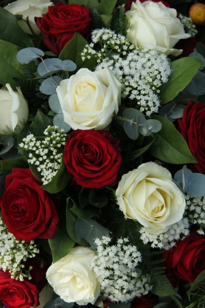 Red and white roses in a bridal bouquet photo