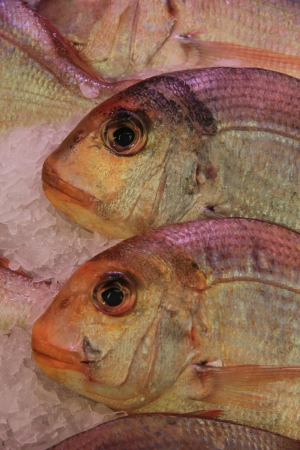 gilthead bream: Fresh gilt-head bream at a fish market