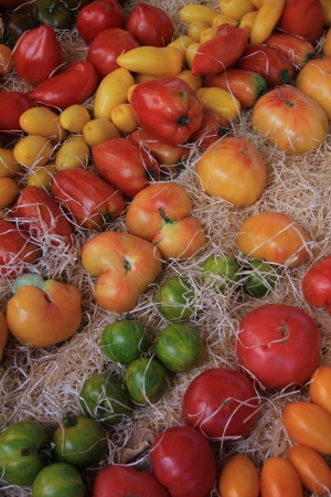 Tomatoes in various shapes and colors at a market in the Provence, France photo
