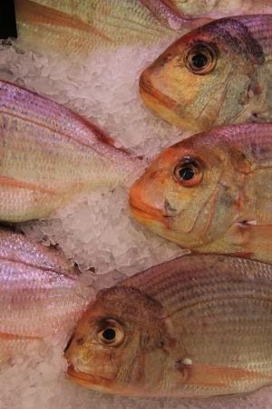 Fresh gilt-head bream at a fish market photo